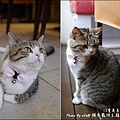 貓爸-33.jpg
