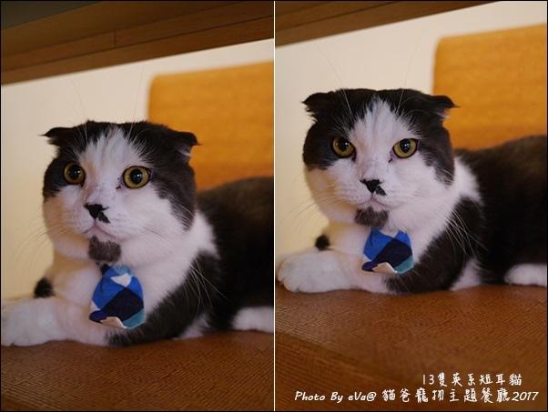 貓爸-35.jpg