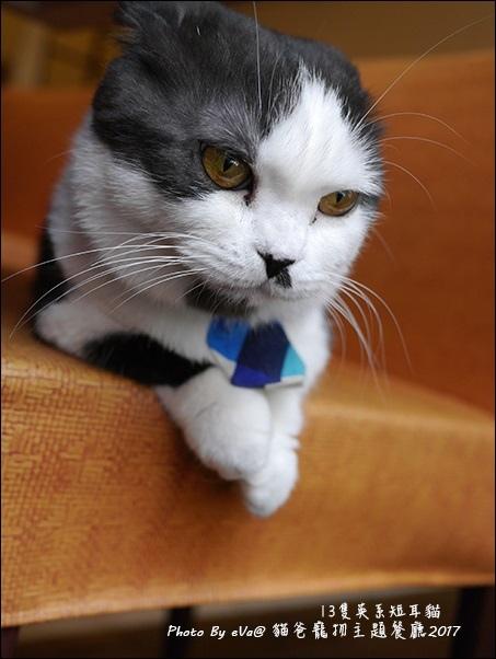貓爸-36.jpg