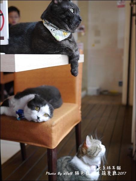 貓爸-37.jpg