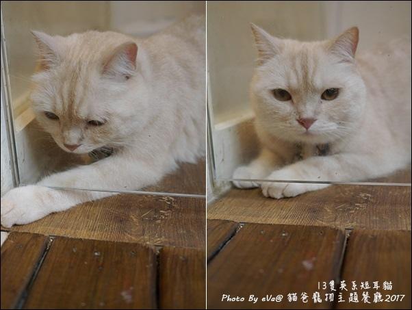 貓爸-40.jpg
