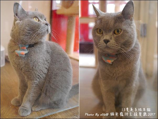貓爸-41.jpg