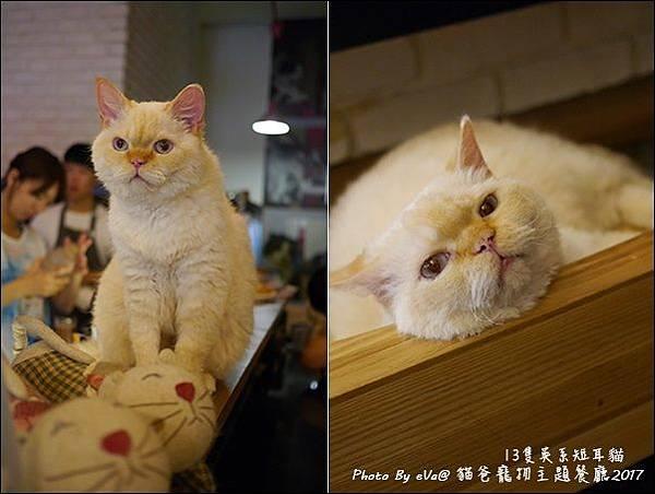 貓爸-42.jpg