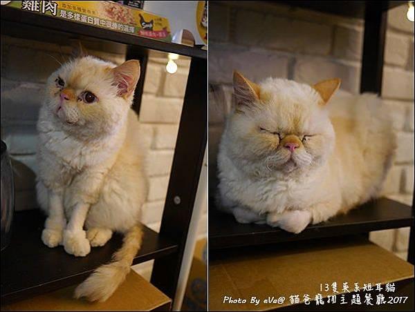 貓爸-43.jpg