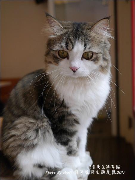 貓爸-45.jpg