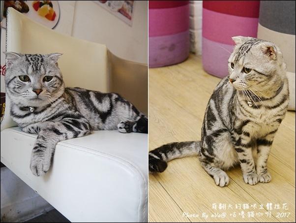 咕嚕貓咖啡-35.jpg