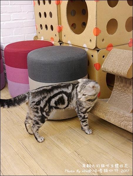 咕嚕貓咖啡-36.jpg