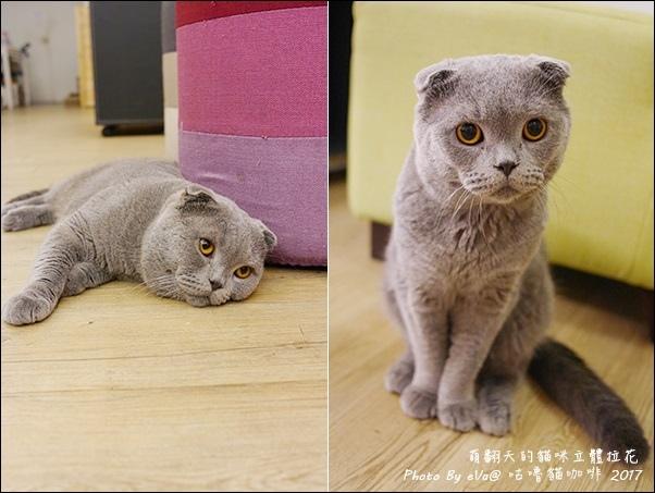 咕嚕貓咖啡-37.jpg
