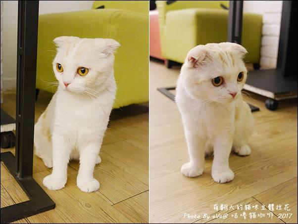 咕嚕貓咖啡-39.jpg