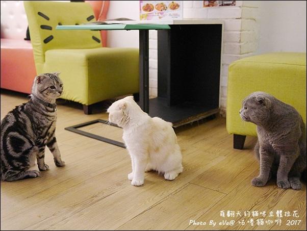 咕嚕貓咖啡-41.jpg