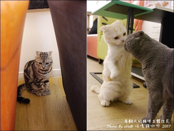 咕嚕貓咖啡-42.jpg