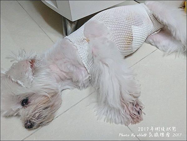 狗狗手術-12.jpg