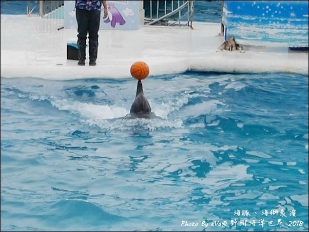 野柳海洋世界-46.jpg