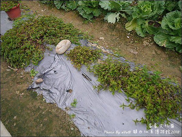 關西仙草博物館-05.jpg