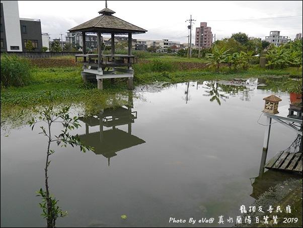 真水蘭陽白鷺鷥-29.jpg