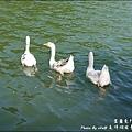長埤湖-13.jpg