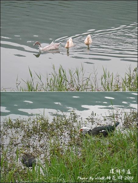 梅花湖-20.jpg