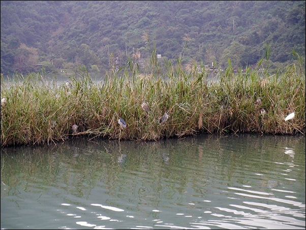 梅花湖-22.jpg