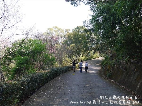 羅望子-06.jpg
