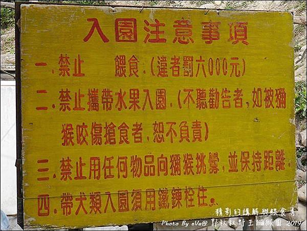 郭叔叔野生獼猴園-12.jpg