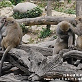 郭叔叔野生獼猴園-29.jpg