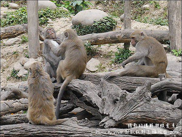 郭叔叔野生獼猴園-28.jpg