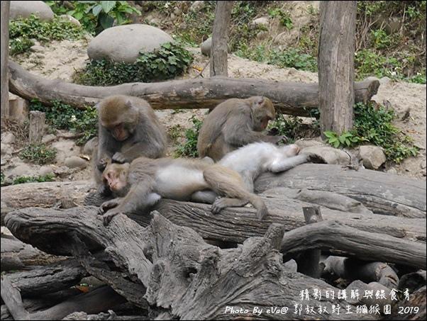 郭叔叔野生獼猴園-31.jpg
