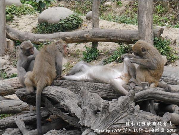 郭叔叔野生獼猴園-30.jpg