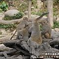 郭叔叔野生獼猴園-33.jpg
