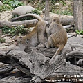 郭叔叔野生獼猴園-32.jpg