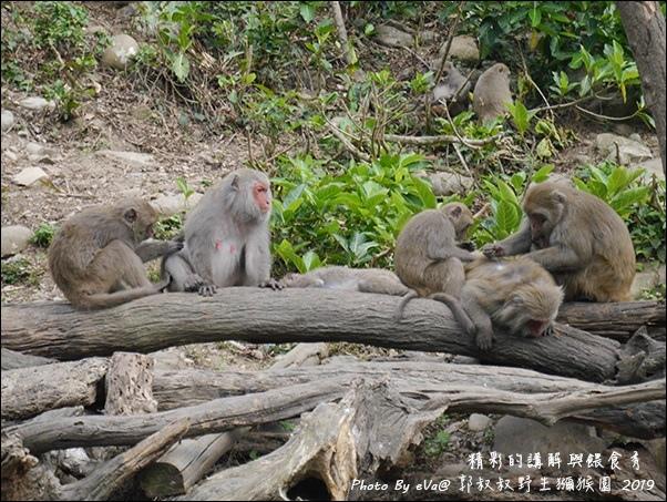 郭叔叔野生獼猴園-34.jpg