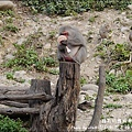 郭叔叔野生獼猴園-37.jpg