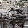 郭叔叔野生獼猴園-39.jpg