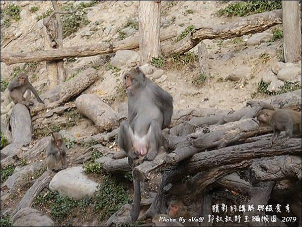 郭叔叔野生獼猴園-43.jpg
