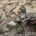 郭叔叔野生獼猴園-44.jpg