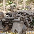 郭叔叔野生獼猴園-46.jpg