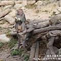 郭叔叔野生獼猴園-45.jpg