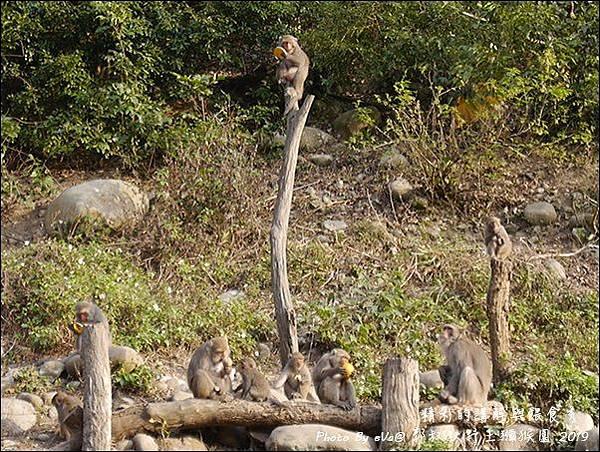 郭叔叔野生獼猴園-47.jpg