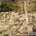 郭叔叔野生獼猴園-48.jpg