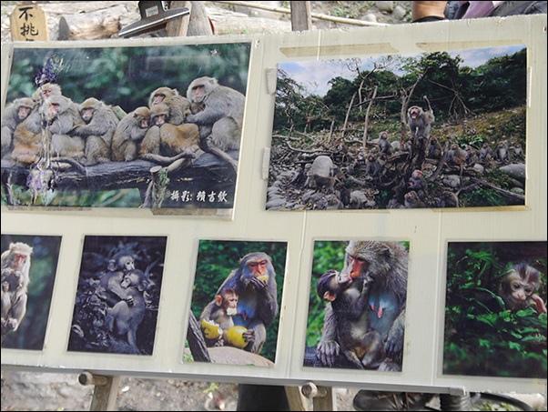 郭叔叔野生獼猴園-50.jpg