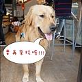 獵犬不打獵-41.jpg