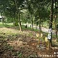 深耕寵物森林園區-15.jpg