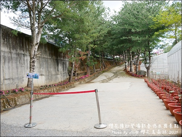 櫻花鳥森林-07.jpg