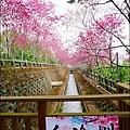 櫻花鳥森林-09.jpg