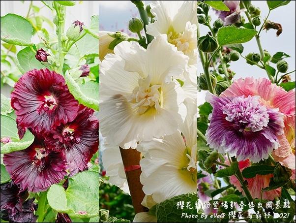 櫻花鳥森林-18.jpg