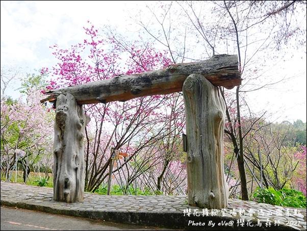 櫻花鳥森林-20.jpg