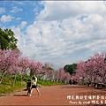 櫻花鳥森林-21.jpg