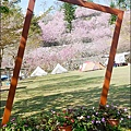 櫻花鳥森林-29.jpg