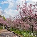 櫻花鳥森林-24.jpg