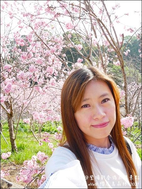 櫻花鳥森林-26.jpg